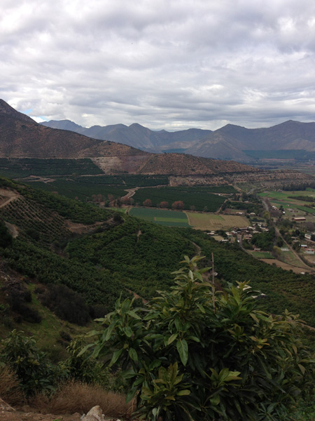 The vista from Rodrigo\'s avocado farm