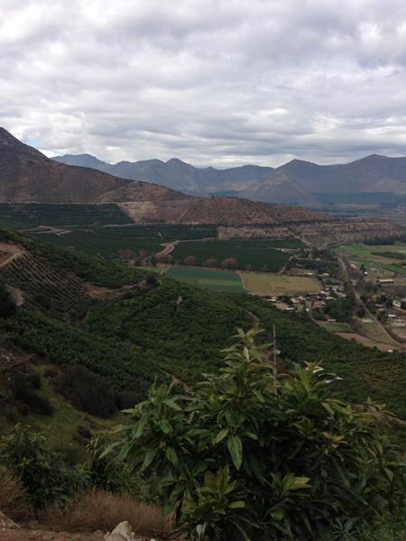 The vista from Rodrigo\'s avocado farm