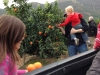 Picking oranges from Rodrigo's orange trees
