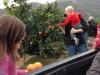 Picking oranges from Rodrigo's orange trees