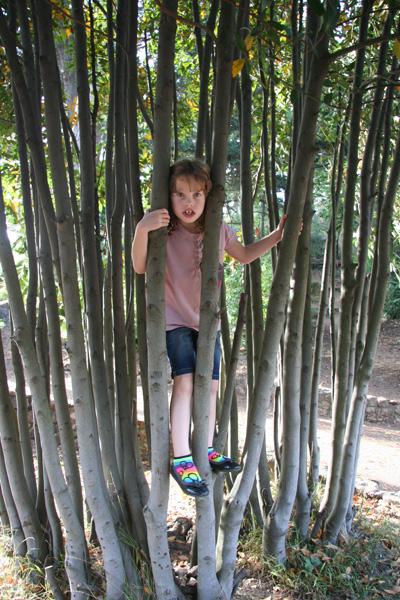 Sam the Anti-Preemie: Tree jail